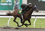 April 03, 2014: Hip 41 Harlan's Holiday - Smiling Eyes consigned by Secure Investments worked 1/8 in 10:3.  Candice Chavez/ESW/CSM