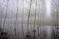- Luzzara (Reggio Emilia), pioppeto e terreno golenale allagato<br /> <br /> - Luzzara (Reggio Emilia), poplar wood and flooded alluvial soil