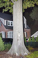 Life-sized skeletons are dressed up for Halloween decorations along Hillcrest Road in Belmont, Massachusetts, USA, on Mon., Oct. 30, 2017. A resident said the neighborhood has been doing similar coordinated decorations along the road for the previous 3 or 4 years. In this image, a skeleton is climbing a tree, chased by two skeleton dogs or cats.