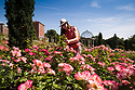 """19/06/18<br /> <br /> ***With video  https://www.youtube.com/watch?v=dRLkN49V02k  ***<br /> <br /> Julie Thomas (59) tends to the roses.<br /> <br /> It's not just a 'good year for the roses', it might be the best ever year for the roses.<br /> <br /> The colours from a rose garden in the Derbyshire Dales stand out like an oasis surrounded by parched fields because, unbelievably, the roses need NO water to bloom.<br /> <br /> Julie Thomas (59) who owns Hopton Hall near Ashbourne said: """"The roses are the best they've ever been, they love the dry hot and sunny conditions - we don't even need to water them. <br /> <br /> """"Usually the rain would knock the petals off and we be busy dead-heading at this time of year but there's hardly anything to do at the moment. The blooms are in a kind of drought state - the flowers are staying for much longer than usual. And there are lots more flowers coming too.<br /> <br /> The classic walled english rose garden was planted with 2000 roses 12 years ago by estate manager, Spencer Tallis (51). He planted all the roses and plants in the garden in 2004 and has since made it his life's work tending them.<br /> <br /> """"I do have to water the box hedges a little but the roses are looking after themselves. Normally at this time of year we'd all be busy dead-heading but there's hardly anything to do at the moment""""<br /> <br /> Julie and her family bought the property eight years ago and have continued to plant and care for the rose garden and now open the garden for visitors.<br /> <br /> All Rights Reserved: F Stop Press Ltd. +44(0)1335 344240 www.fstoppress.com www.rkpphotography.co.uk"""