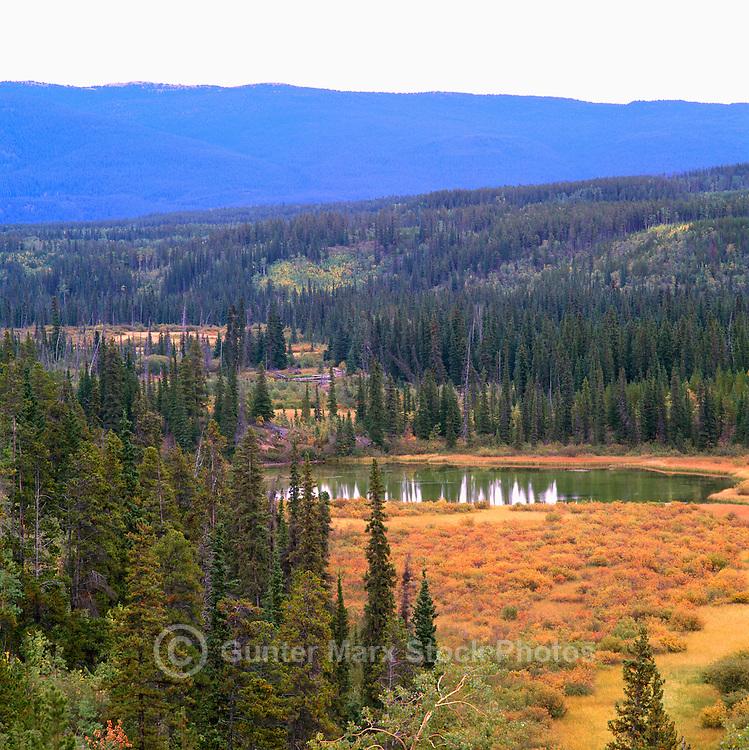 Boreal Forest along Alaska Highway, Northern BC, British Columbia, Canada, Autumn