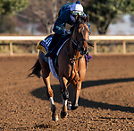 November 4, 2020: Dunbar Road, trained by trainer Chad C. Brown, exercises in preparation for the Breeders' Cup Distaff at Keeneland Racetrack in Lexington, Kentucky on November 4, 2020. Carolyn Simancik/Eclipse Sportswire/Breeders Cup