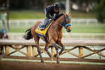 ARCADIA, CA - OCTOBER 29: Hoppertunity with Rafael Bejarano aboard prepares for the Breeders' Cup Classic at Santa Anita Park on October 29, 2016 in Arcadia, California. (Photo by Alex Evers/Eclipse Sportswire/Getty Images)