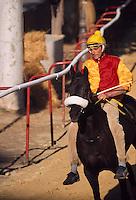 Italien, Piemont, Pferderennen beim Palio in Asti, beim Palio, das jedes Jahr am 3.Septembersonntag stattfindet, treten 14 Stadtviertel gegeneinander zum Pferderennen an