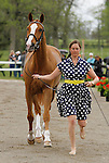 LEXINGTON, KY - APRIL 27: #5 Share Option and rider Lillian Heard jog before the vets and grand jury during the first horse inspection for the Rolex Three Day Event on Wednesday April 27, 2016 in Lexington, Kentucky. (Photo by Candice Chavez/Eclipse Sportswire/Getty Images)