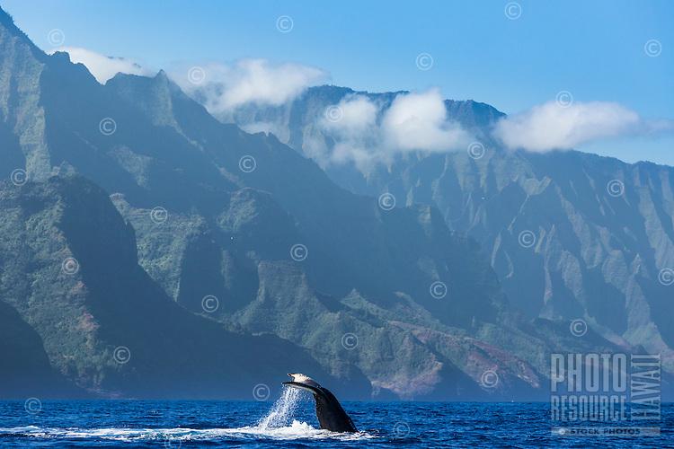 """A humpback whale does a """"fluke down"""" dive off of the Na Pali Coast of Kaua'i."""