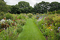 Upton Grey, mixed borders in the old kitchen garden, looking south, mid July.