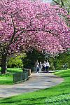 Great Britain, England, London: Cherry Blossom in Hyde Park | Grossbritannien, England, London: Kirschbluete im Hyde Park