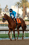 ARCADIA, CA JANUARY 3: #7 Kalypso, ridden by Joel Rosario, returns to the connections after winning the Santa Ynez Stakes (Grade ll) on January 3, 2021 at Santa Anita Park in Arcadia, CA.(Photo by Casey Phillips/EclipseSportswire/CSM)