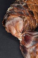 Fichten-Samen in den Schuppen eines geöffneten Zapfen, Fichtenzapfen, Samen einer Fichte, geflügelter Same,  Windflieger, Gewöhnliche Fichte, Rotfichte, Rot-Fichte, Picea abies, Commun spruce, Christmas Tree, Epicéa