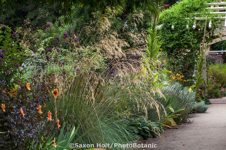 Perennial border with flowering Stipa gigantea ornamental grass; Gamble Garden, Palo Alto, California