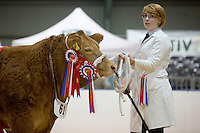 The East Of England Smithfield Festival 2016<br /> Picture Tim Scrivener -www.agriphoto.com<br /> Mobile 07850 303986 e-mail tim@agriphoto.com<br />           ….covering agriculture in the Uk….<br /> <br /> <br />  The East Of England Smithfield Festival 2016<br /> Picture Tim Scrivener -www.agriphoto.com<br /> Mobile 07850 303986 e-mail tim@agriphoto.com<br />           ….covering agriculture in the Uk….