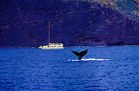 People whale watching from boat off coast of Lanai near Manele Bay