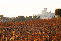 The vineyard of Chateau des Fines Roches with syrah vines and pebbly rocky galet soil and a view over the village Chateauneuf-du-Pape, Vaucluse, Rhone, Provence, France