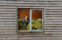 A window full of Posies - Beth Hilliard sorts through the spring Posies at Cornish Blooms