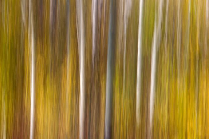 Impressionistic portrayal of fall color.