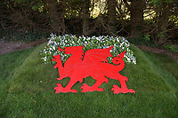 """COPY BY TOM BEDFORD<br />Pictured: A welsh dragon in the back garden of Matt Evans in south Wales, UK<br />Re: A soccer-mad lottery millionaire has splashed out on his own football pitch complete with a dug-out on the touchline.<br />Former postman Matt Evans 37, turned his back garden into a mini soccer stadium so his mates can come for a kick about.<br />The super-rich bachelor is blowing his fortune on his love for the beautiful game.<br />He said: """"I'm living the dream by having my own pitch with lifesize goals and all the white markings.<br />""""I invite my old workmates around for a game and we sit in the dugout to talk about football.<br />""""My dad comes along for a game but we usually ask him to play in goal.""""<br />Matt was a £300-a-week postman three years ago using jumpers for goalposts in his local park.<br />But after a lottery lucky dip netted him £2,604,015 he's living the life of a Premiership soccer star."""