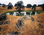 Oak Grass woodland, Sierra Nevada west