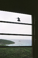 Hummingbird caught inside<br />