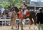 July 27, 2014: Untapable, the only filly among the Haskell contenders, walks in the paddock before the race. Bayern, Martin Garcia up, wins the Haskell Invitational at Monmouth Park in Oceanport, NJ.  Trainer is Bob Baffert; owner is Kaleem Shah, Inc. ©Joan Fairman Kanes/ESW/CSM