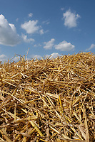 19.7.2021 Barley Straw<br /> ©Tim Scrivener Photographer 07850 303986<br />      ....Covering Agriculture In The UK....