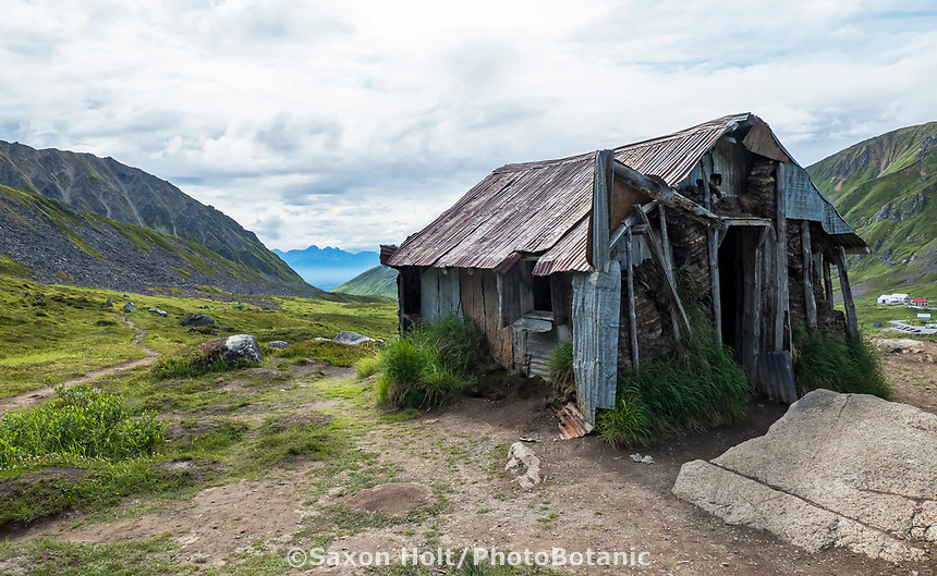 Abandoned miner's cabin on trail to Gold Core Lake through subalpine heath tundra, Alaska; at Independence Mine State Historical Park