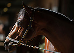 October 29, 2019 : Breeders' Cup Turf Sprint entrant Final Frontier, trained by Thomas Albertrani, walks the barn in preparation for the Breeders' Cup World Championships at Santa Anita Park in Arcadia, California on October 29, 2019. Carolyn Simancik/Eclipse Sportswire/Breeders' Cup/CSM