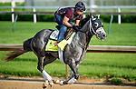 LOUISVILLE, KY - MAY 02: Destin, trained by Todd Pletcher and owned by Twin Creeks Racing Stables, LLC, exercises and prepares during morning workouts for the Kentucky Derby and Kentucky Oaks at Churchill Downs on May 2, 2016 in Louisville, Kentucky. (Photo by Scott Serio/Eclipse Sportswire/Getty Images)