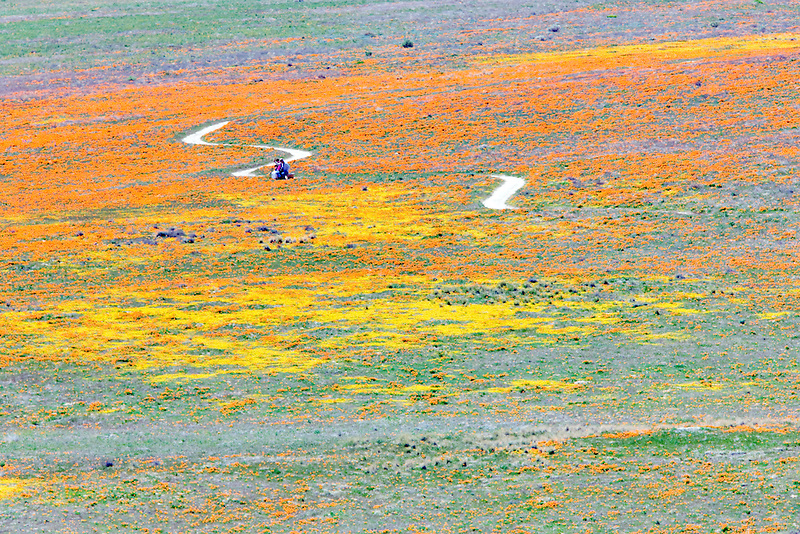 Path with hikers on bench through Antelope Valley Poppy Preserve, California