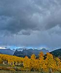Approaching Storm, Aspens, Cimmaron Ridge, Precipice Peak, Uncompahgre National Forest, Colorado