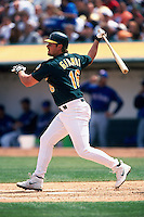 OAKLAND, CA - Jason Giambi of the Oakland Athletics in action during a game at the Oakland Coliseum in Oakland, California on April 14, 2001. Photo by Brad Mangin