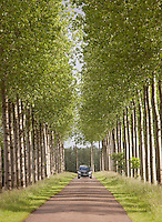 Trees alongside the Canal du Centre, Hainaut, Wallonia Region, Belgium