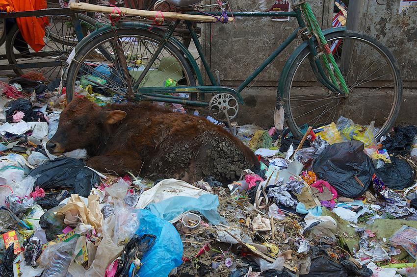 Garbage Kathmandu, Nepal