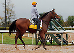 October 28, 2015: Keen Ice, trained by Dale Romans, and owned by Donegal Racing, is entered in the Breeder's Cup Classic.  Candice Chavez/ESW/CSM