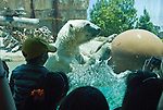 spectators watching a captive polar bear play with a ball in the water, not released