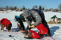 Robert Sorlie removes booties from his dogs after arriving at Nikolai. Photo by Jon Little.
