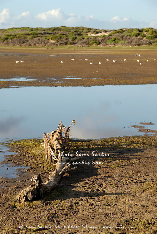 Bottom sand of Flamingo lake estuary at low tide, near Hermanus, South Western Cape, South Africa