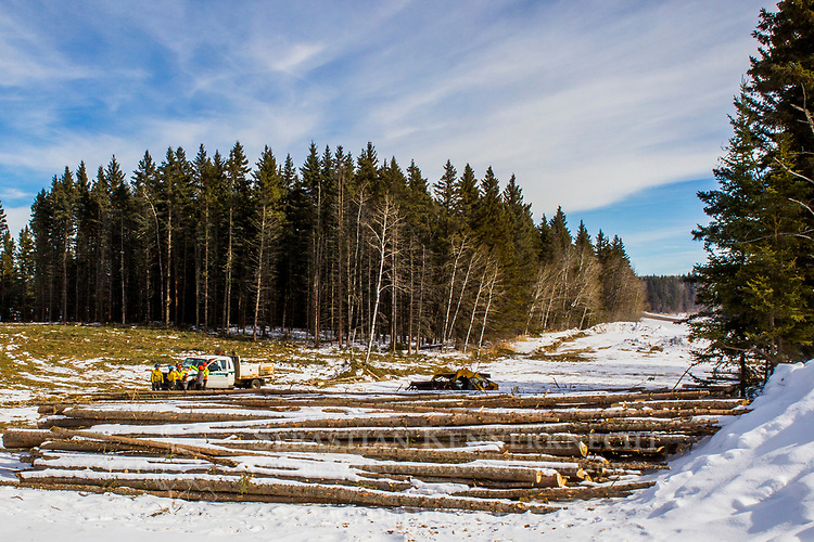 Boreal forest being logged in winter, Manitoba, Canada