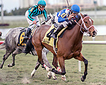 HALLANDALE BEACH, FL - JAN 20:Starship Jubilee #4 with Jose Lezcano on board for trainer Kevin Attard wins the $150,000 Sunshine Millions Filly and Mare Turf Stakes at Gulfstream Park on January 20, 2018 in Hallandale Beach, Florida. (Photo by Bob Aaron/Eclipse Sportswire/Getty Images)