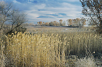 Wetland with frost, Bosque del Apache National Wildlife Refuge, Socorro, New Mexico, USA,