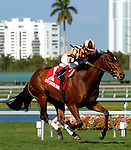 3 April 2011: Little Mike ridden by Joe Bravo win the Emirates Airlines Appleton Stakes at Gulfstream Park in Hallandale Beach, FL.