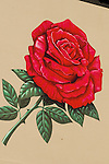 Painting of a Rose on a Wall in Portland, Oregon