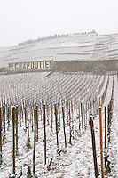 Sign Paul Jaboulet Aine, M Chapoutier, the Les Greffeux vineyard in front. and Chante Alouette above. The Hermitage vineyards on the hill behind the city Tain-l'Hermitage, on the steep sloping hill, stone terraced. Sometimes spelled Ermitage. Vineyards under snow in seasonably exceptional weather in April 2005. Tain l'Hermitage, Drome, Drôme, France, Europe