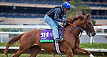 DEL MAR, CA - NOVEMBER 01: Sadler's Joy, owned by Woodslane Farm and trained by Thomas Albertrani, exercises in preparation for Longines Breeders' Cup Turf at Del Mar Thoroughbred Club on November 1, 2017 in Del Mar, California. (Photo by Jesse Caris/Eclipse Sportswire/Breeders Cup)
