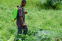 TOGO, Tohoun, village ADJIKAME, farmer spray Herbicide Glyphosate a round-up weed killer, made in china by RAINBOWCHEM,  without protective mask and clothes, in bean filed