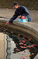 Pictured: A lone cadet deposits poppies in the fountain Friday 11 November 2016<br /> Re: Remembrance Day service at Castle Square Gardens in Swansea, south Wales, UK.