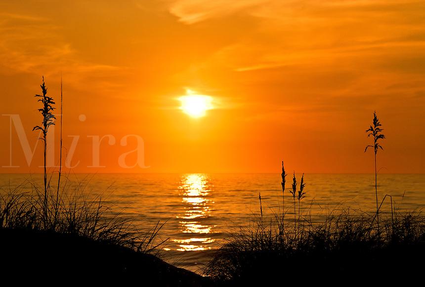 Sea oats sunrise, Outer Banks, North Carolina, USA