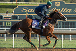 ARCADIA, CA  OCTOBER 30: Breeders' Cup Juvenile Turf Sprint entrant Band Practice, trained by Archie Watson, exercises in preparation for the Breeders' Cup World Championships at Santa Anita Park in Arcadia, California on October 30, 2019. (Photo by Casey Phillips/Eclipse Sportswire/CSM)