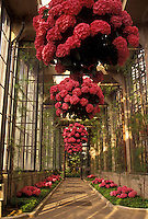 AJ3446, Longwood Gardens, conservatory, Brandywine River Valley, Kennett Square, Pennsylvania, Beautiful pink geraniums hang from the ceiling along the Acadia Passage of the Conservatory at Longwood Gardens in Kennett Square in Brandywine Valley in the state of Pennsylvania.