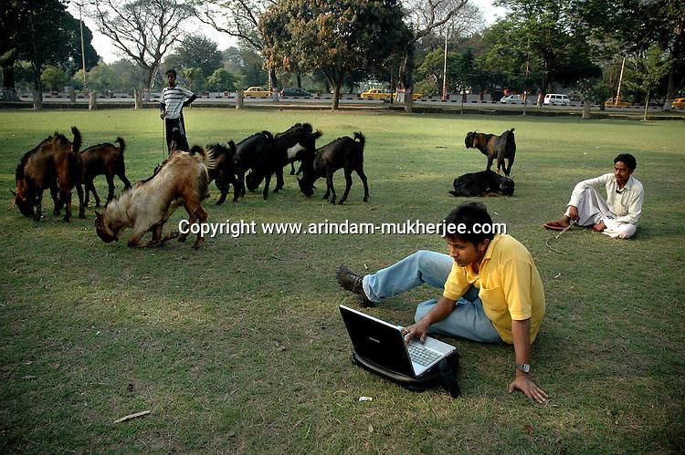 An Indian Executive working on his laptop sitting at the Maidan of Kolkata while shepherds graze their goats. Kolkata, West Bengal, India
